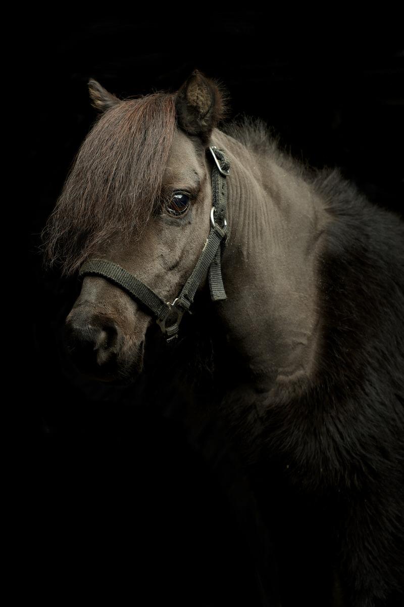 Photographe-Poney-La-Reunion