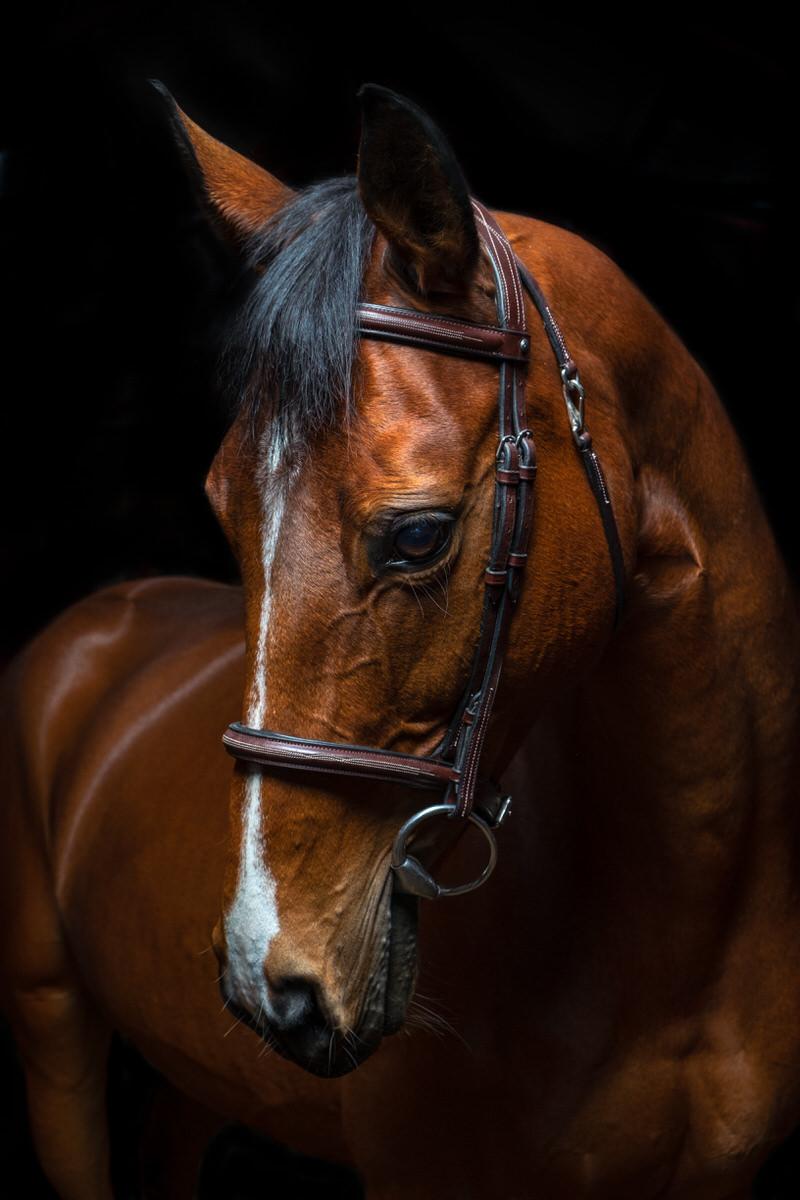 Photographe-Equestre-La-Reunion-1