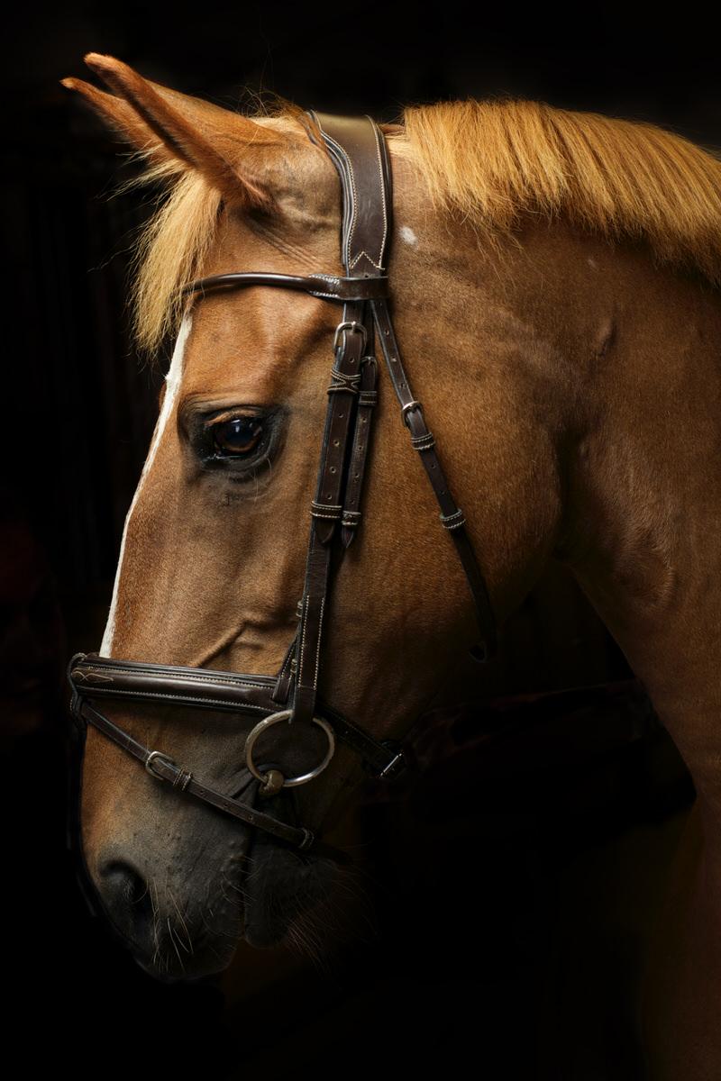Photographe-Equestre-La-Reunion